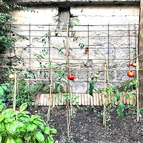 organice vegetable garden casa musa nice